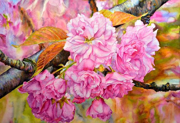 Ross-Barbera,-Cherry-Blossoms-Mounted-Watercolor-on-Canvas,-32-x-42,-2014