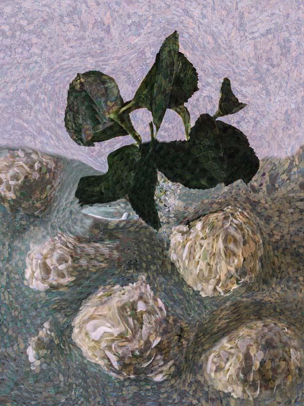 Hydrangea Beheading, 8 x 10, Photography, $300, 110