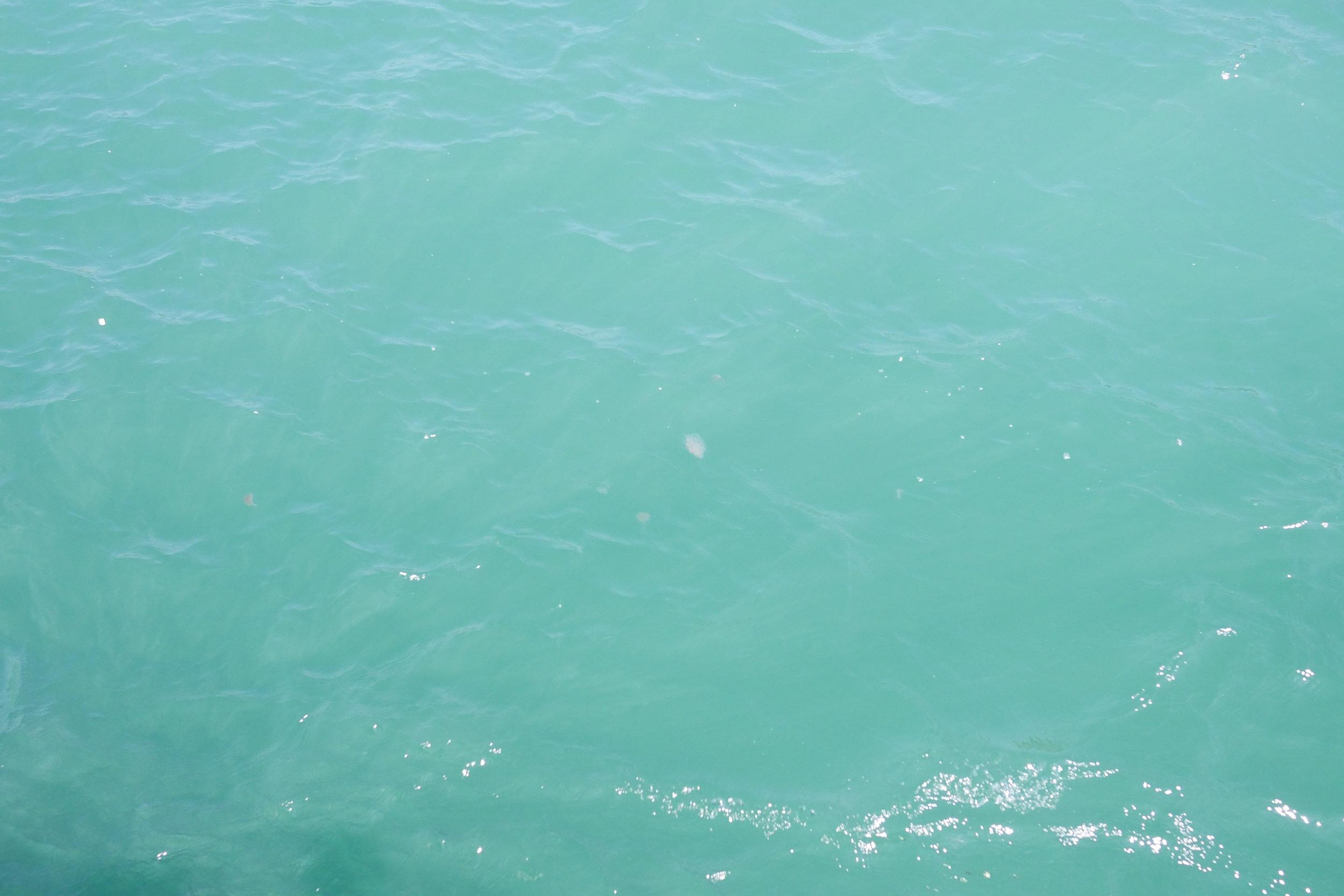 你看到水母嗎?