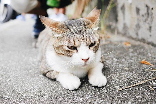 ·🐈· M E O W · 在奧武島隨處可見可愛的小貓,躺在路中央,連車也要乖乖讓路!🚗 · //貓是理直氣壯的無賴,貓生活的首要目的是取悅自己。貓有什麼不要、不想的,不會隱藏或說謊。//   · 許多時候捆綁我們的繩子,也是自己綁上去的,一些不想出席的應酬活動、一些似有似無的規矩,一直讓人喘不過氣來;掙脫這些束縛,雖然不會替我們賺來許多像貓貓過的慵懶時光,但是過得舒心點,過的開心點,又何妨呢? · #adrianawrites #adrianainokinawa