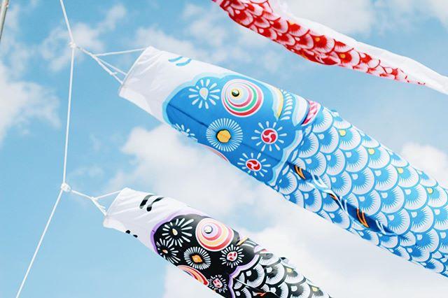 ·🎏· H A N E J I · 羽地ダム鯉のぼり祭り · 隨風 · #adrianainokinawa