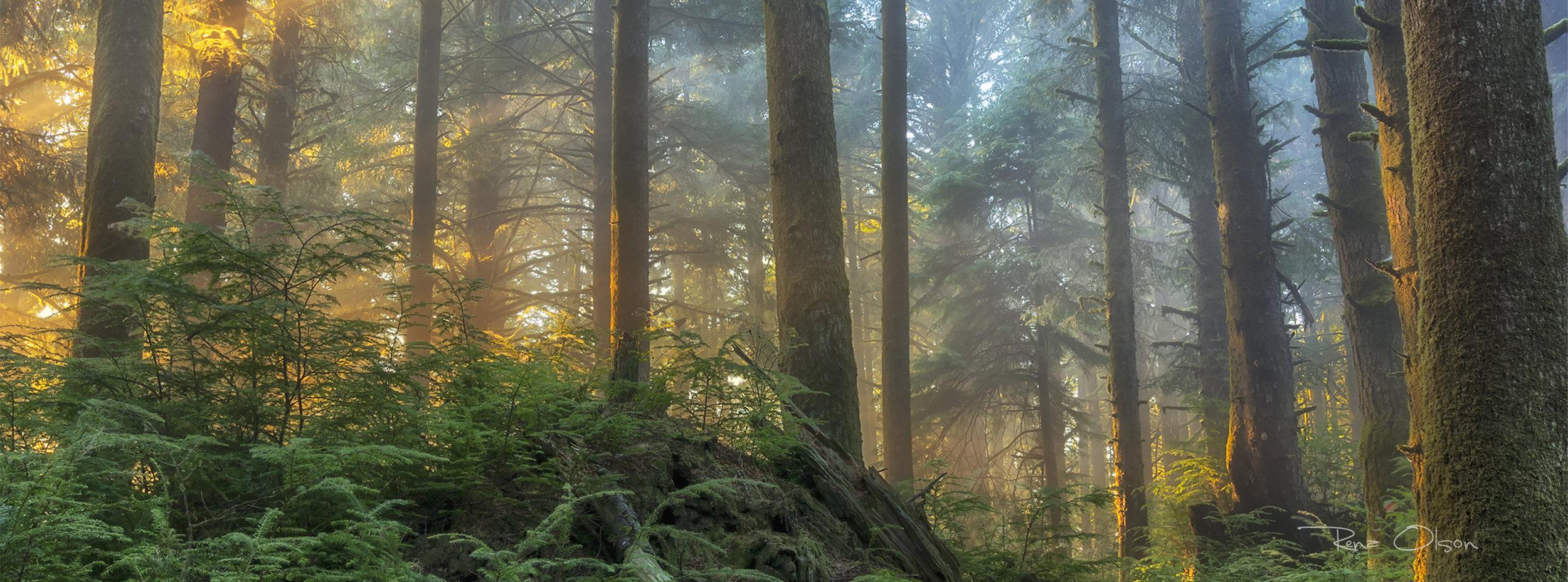 IMG_2384-yakona-forest-lighta SS.jpg