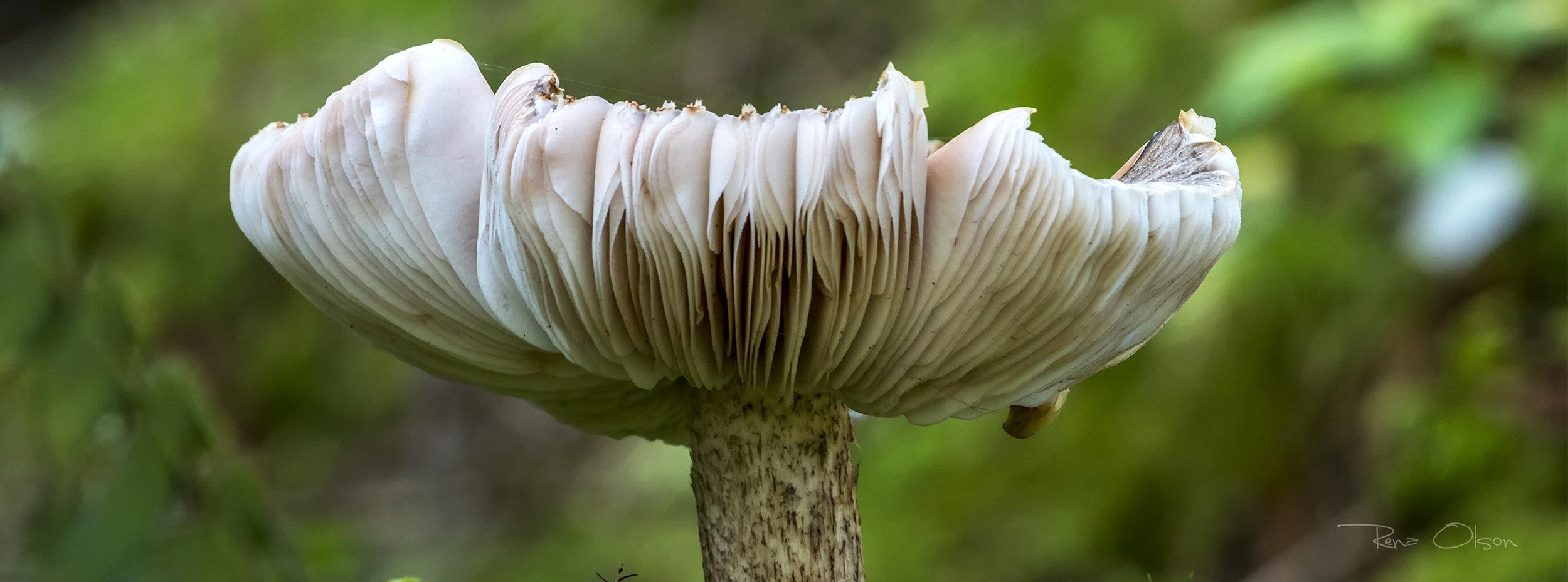 IMG_2507-yakona-mushrooma SS.jpg