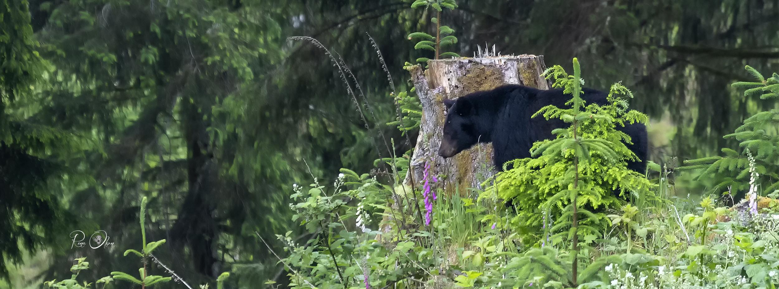 IMG_2345-yakona-black-bear-rena a.jpg