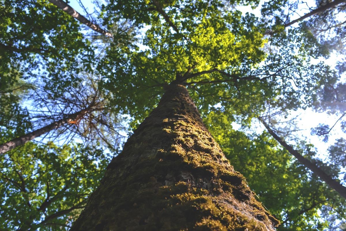 如何參與綠樹派對? - 1. 提供 DOMI綠然能源客戶2. 若消費金額累計達到 NT$20,000,我們將會以您的名義種植一棵樹3. 每次種樹活動開放 10 組家庭參與,請持續關注我們喔