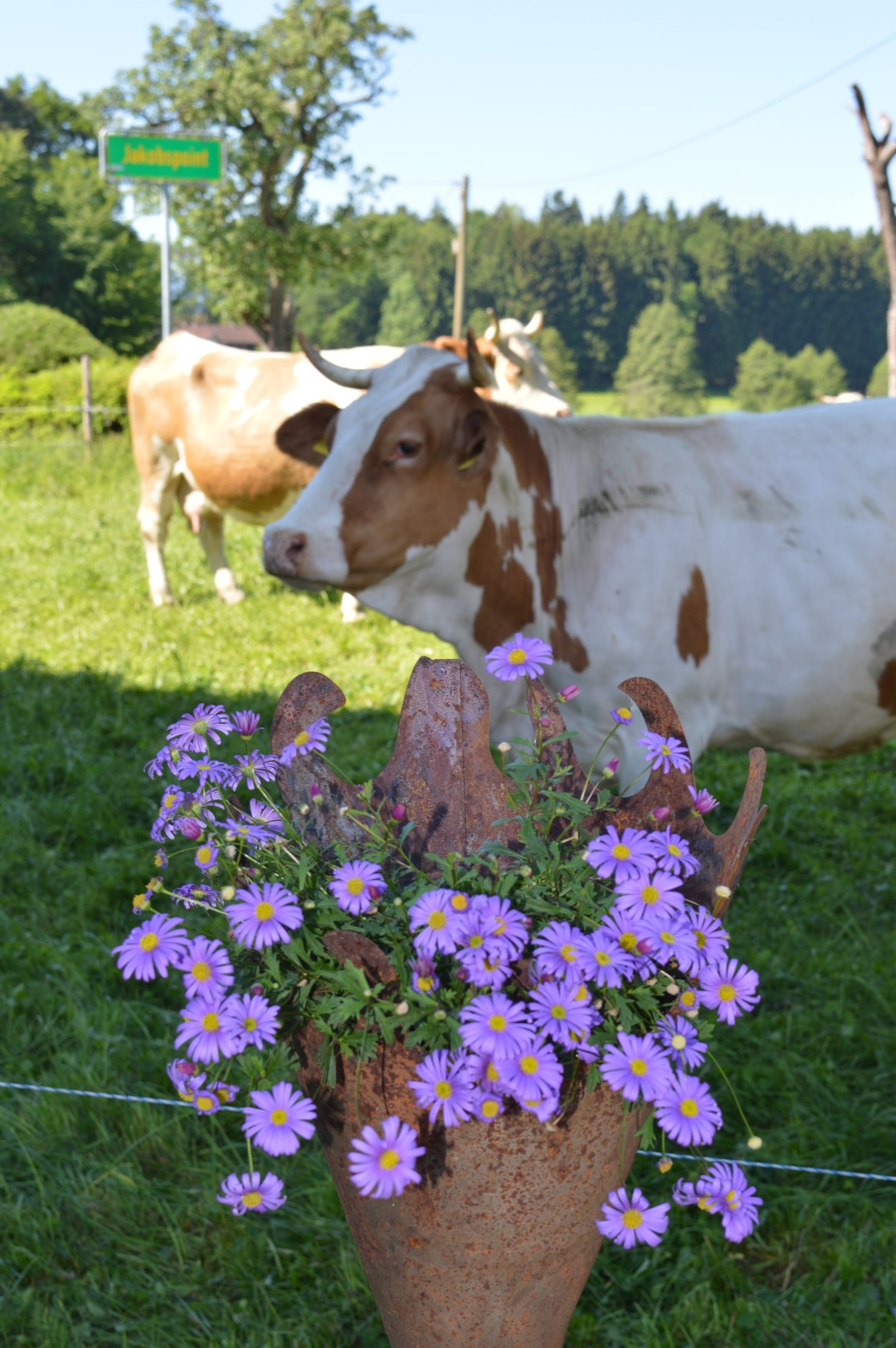 Kuh+&+Blumen.jpg