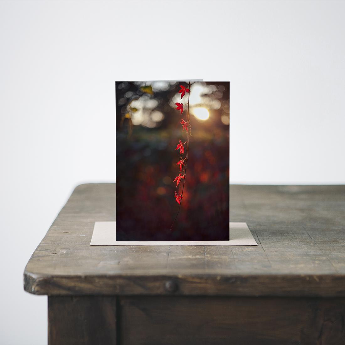 karolina-koziel-photography-products-greetings-cards.jpg