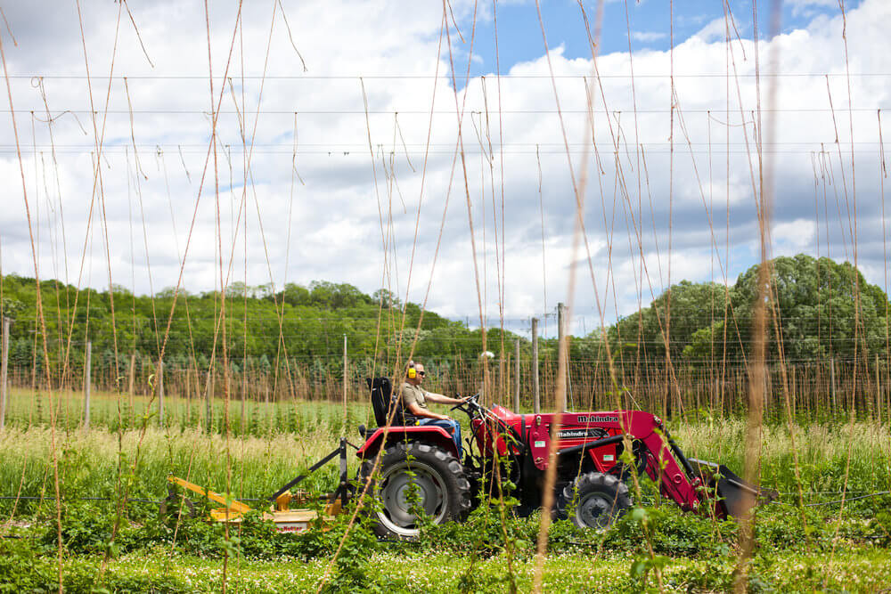 James Altwies of Gorst Valley Hops limps a tractor through the hop yard on his way back to the maintenance shed.