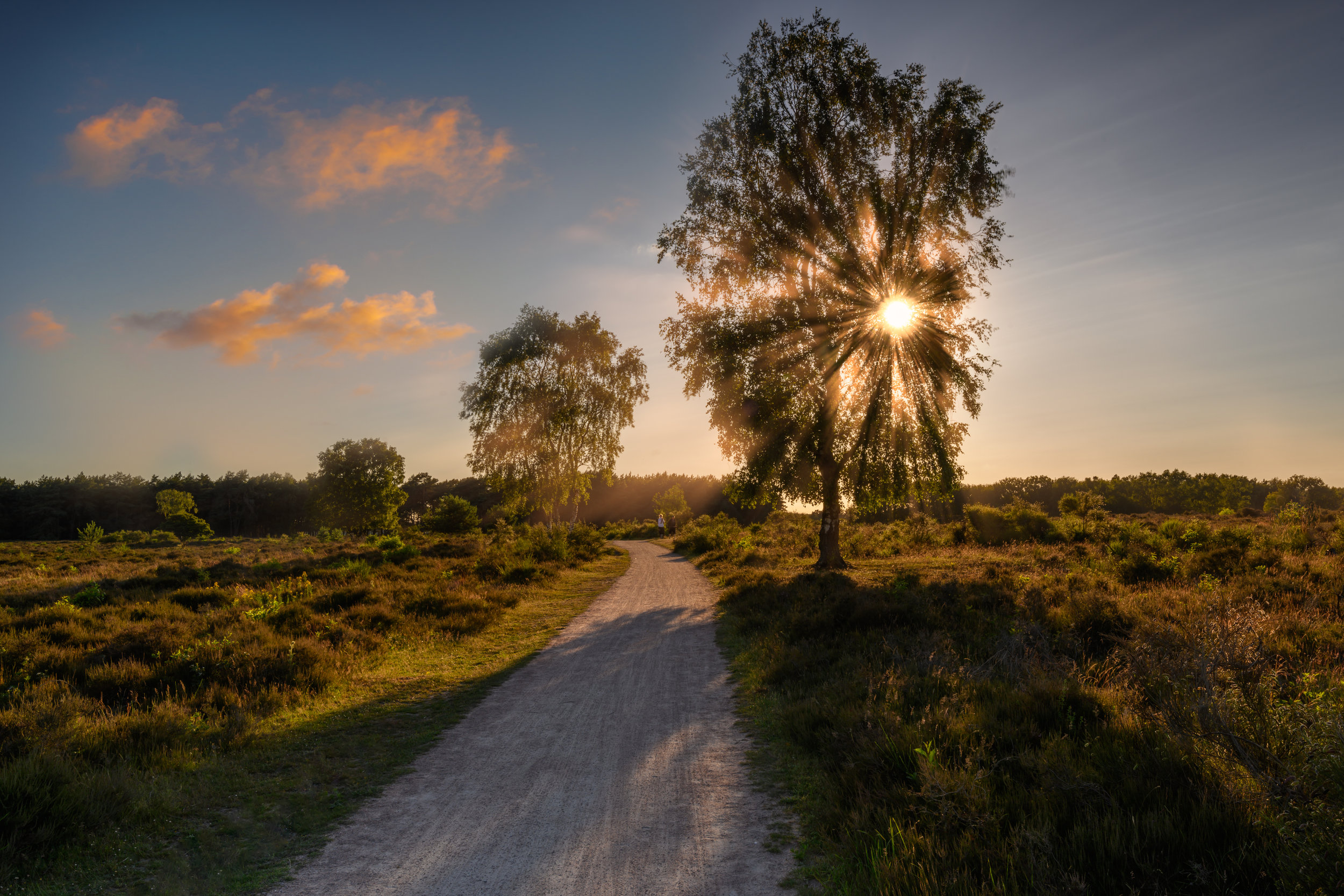 Hilversumse Heide, The Netherlands