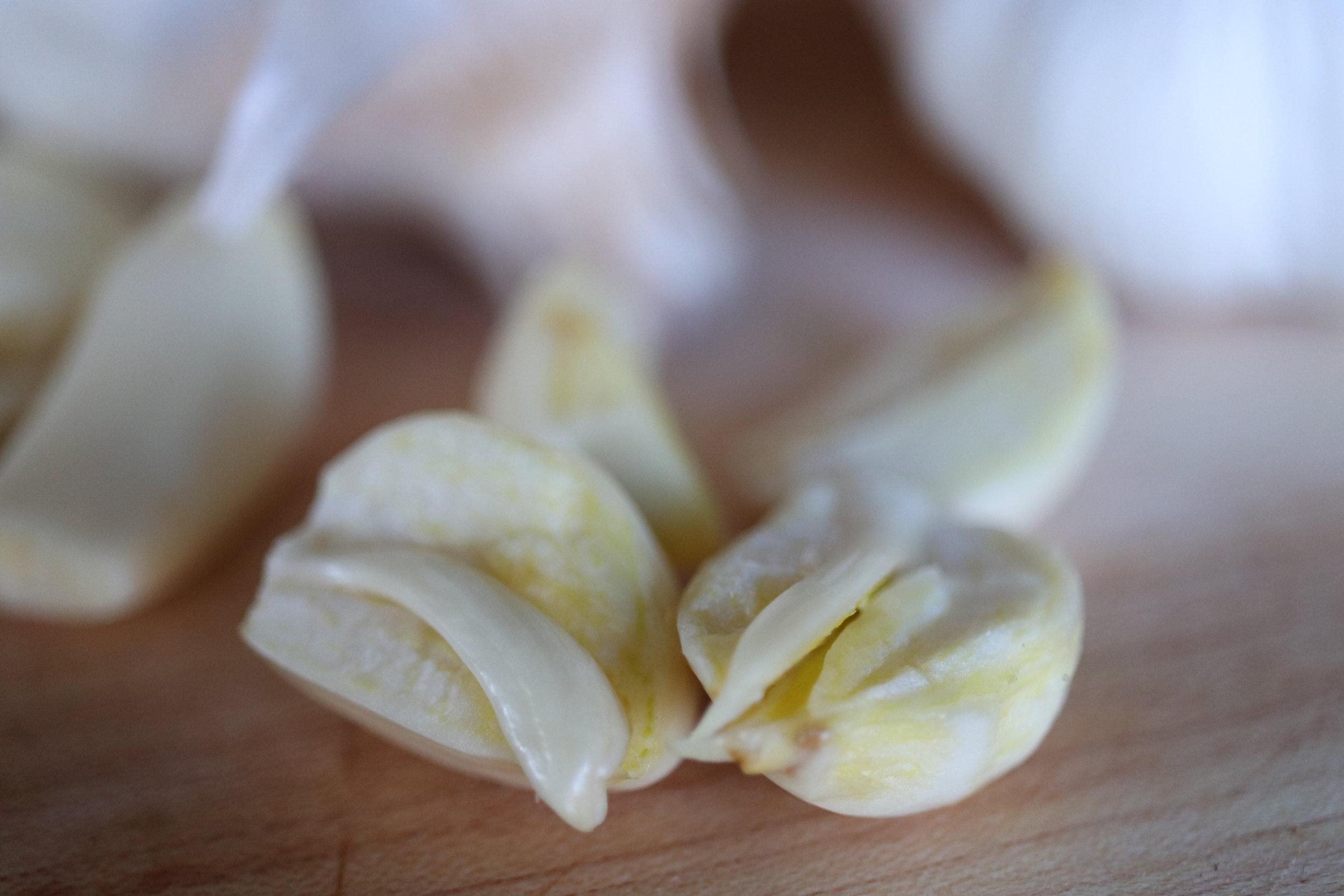 Large garlic root