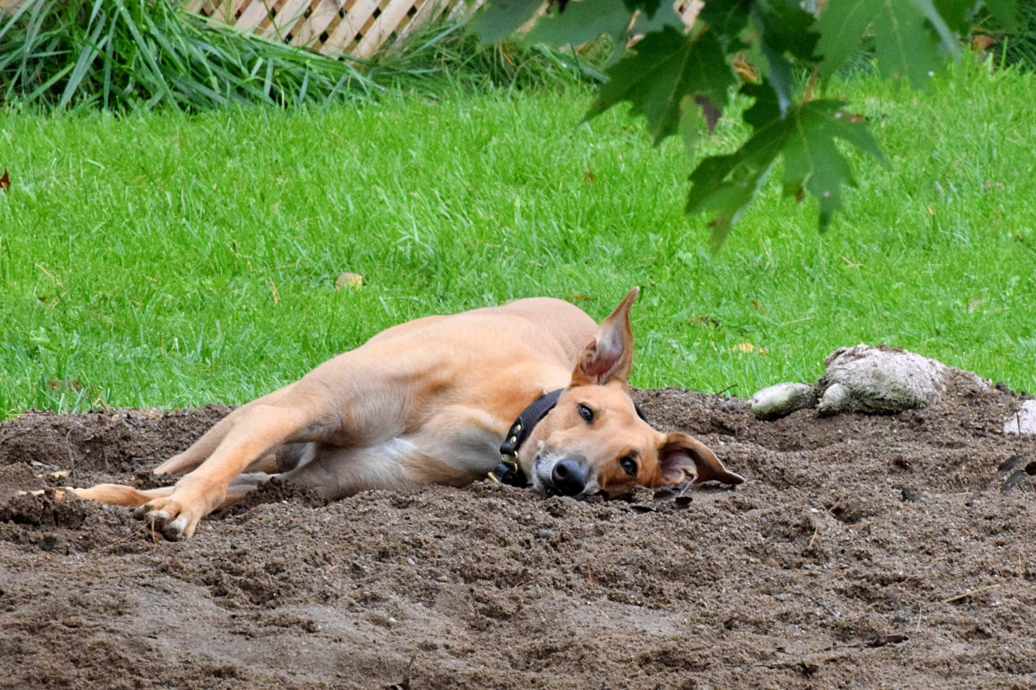 - Sand pile for all your hounds' digging needs.
