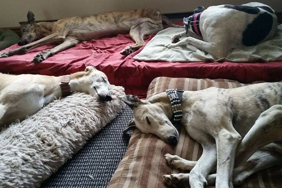 - Single-storey home, with no stairs. We have several different beds and crates for your hound to choose from.Comfortable sleep is important after all that play!