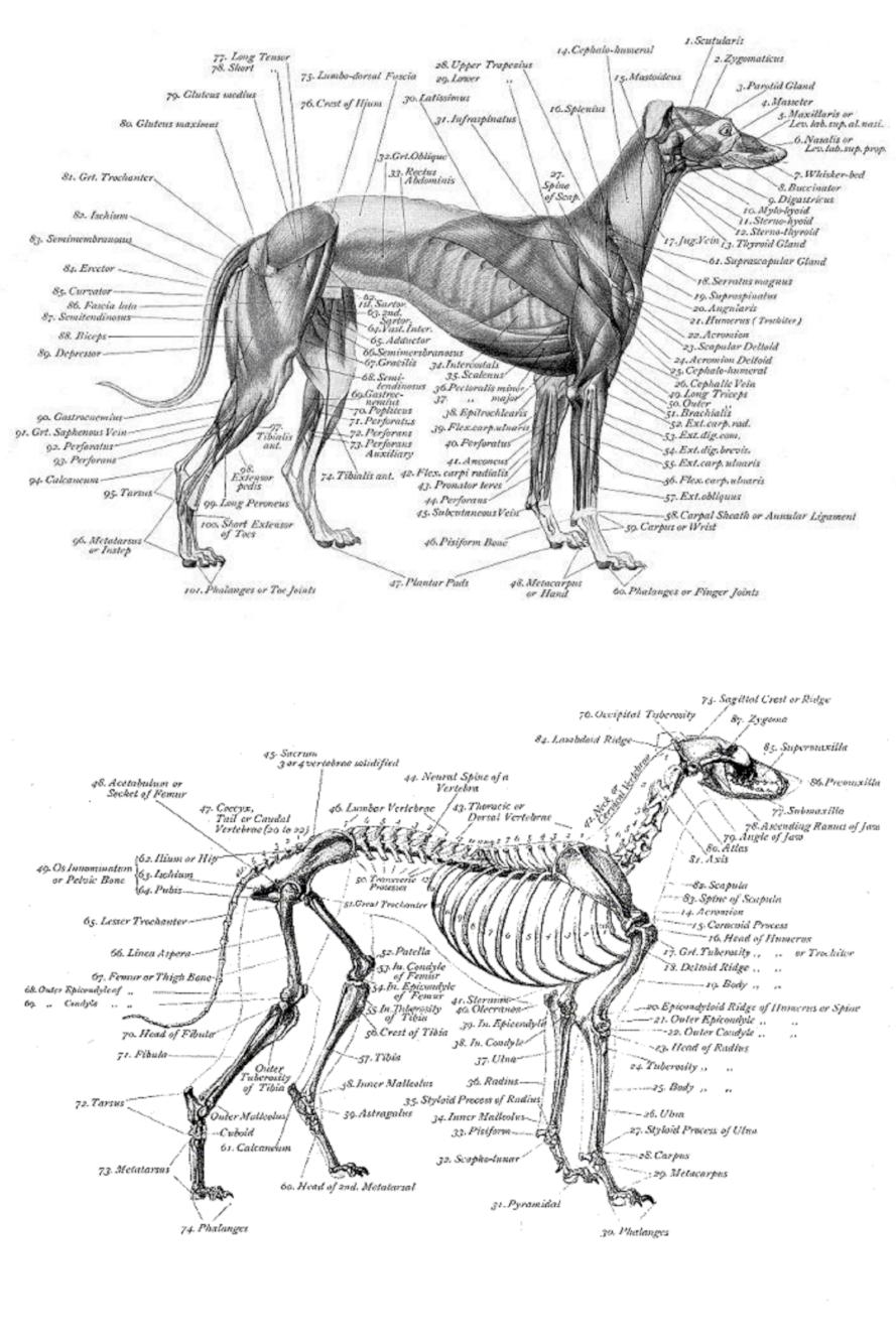 bone_structure_Fotor_Collage.jpg