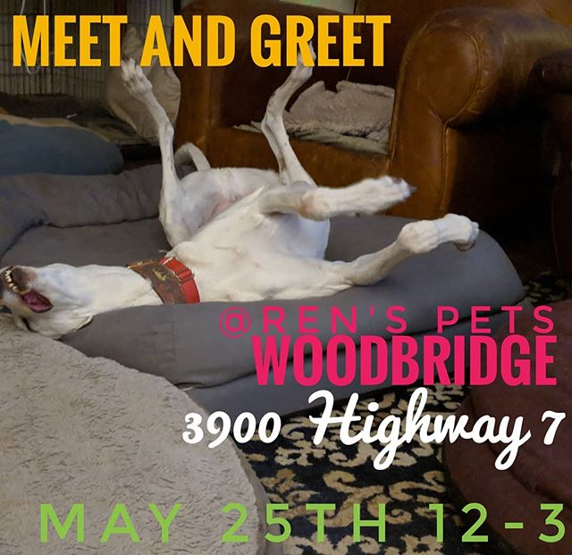 PSA!!!! DATE CHANGE!!! Our meet and greet date has changed to MAY 25th. See you there!!! . . . #greyhoundadoption #meetandgreet #renspetswoodbridge ##retirednotrescued