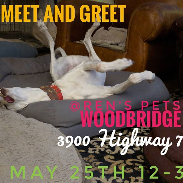 So excited for tomorrow! Sending some of our fosters home to their #furevers and meeting lots of new adopters! It's gonna be great!!! . . . #adoptagreyhoundloseacouch #retirednotrescued #greyhoundadoption #racingPROud #campgreyhoundadoption #meetandgreet #MeetTheGreyhounds #greyhounds #greyhoundsofinstagram #greyhoundlife