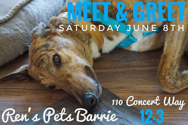 Yay! Another meet and greet! Come meet us and our houndies at #RensPetsBarrie. . . . #MeetTheGreyhounds #meetandgreet #retirednotrescued #retiredworkingdog #adoptagreyhoundloseacouch