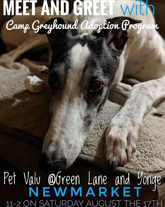 Last meet and greet of the summer! Though we won't have any adoptable greyhounds with us, it's a great opportunity to meet a greyhound or two and see if the breed is for you! Or to stop by & say hello! 11-2 on Saturday, August 17th. See you there! . . . #adoptagreyhoundloseacouch #adoptdontshop #CGAP #PetValu