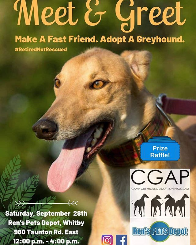Come meet us at #renspetswhitby on Saturday, September 28th!  #adoptagreyhoundloseacouch #retirednotrescued #campgreyhoundadoption #cgap credit to Leslie Town for the picture.