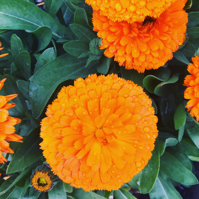 organic-gardening-workshops-los-angeles.JPG