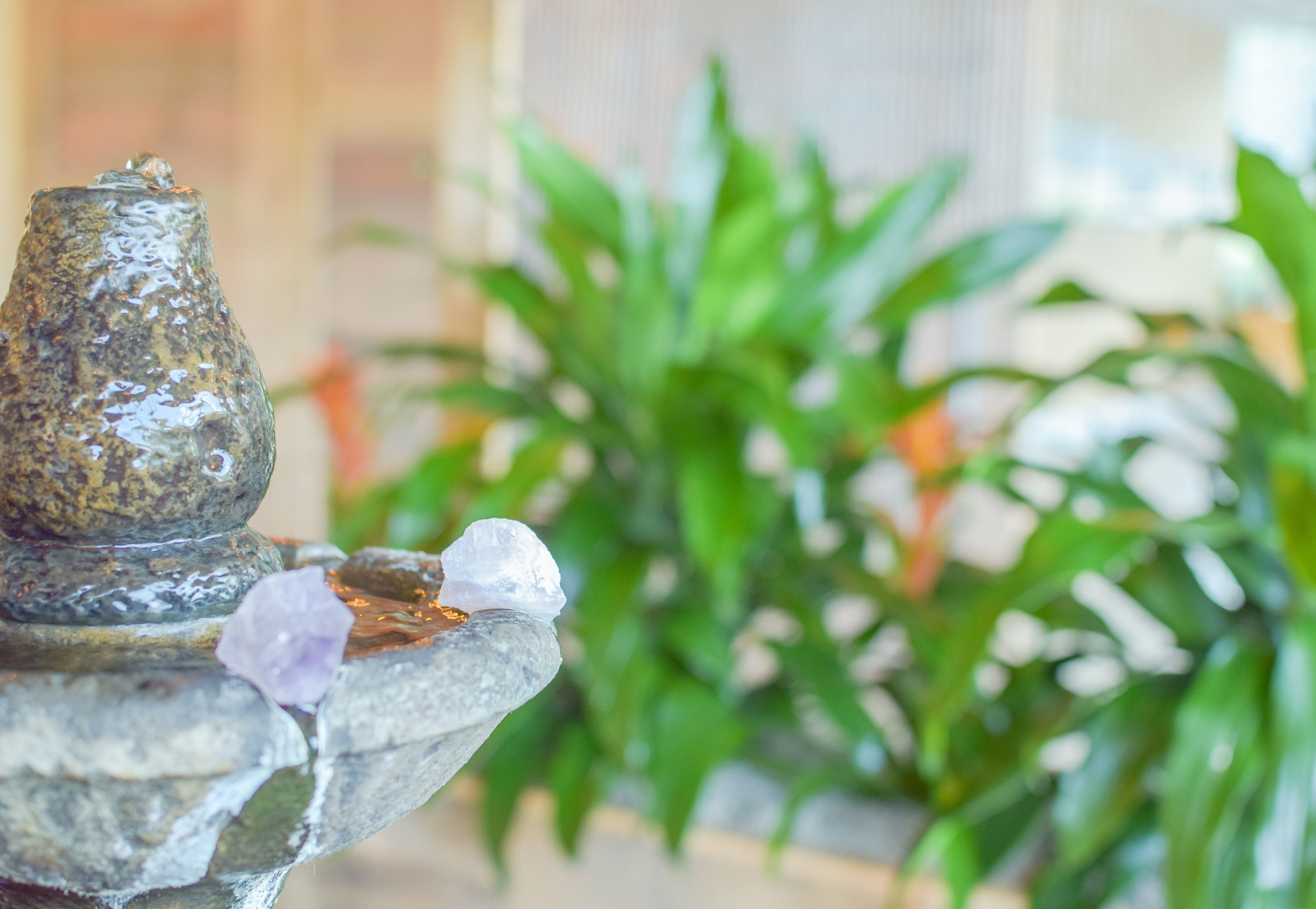 Relax - In our indoor garden space filled with nature