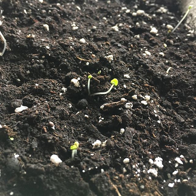 Did everyone make it through that winter? Yeesh. As my little basil plants come through the soil, I'm thinking about new beginnings and welcoming change and growth.