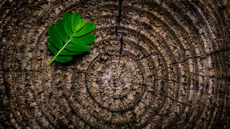 Tree Rings | Alison Murphey LMFT |  Mobile Concierge Therapist