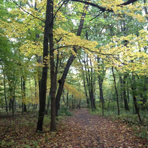 THATCHER WOODS - Thatcher Wood Hiking Trail is a 2.1 mile lightly trafficked loop trail located near River Forest, Illinois that features a river and is good for all skill levels.Trail Map