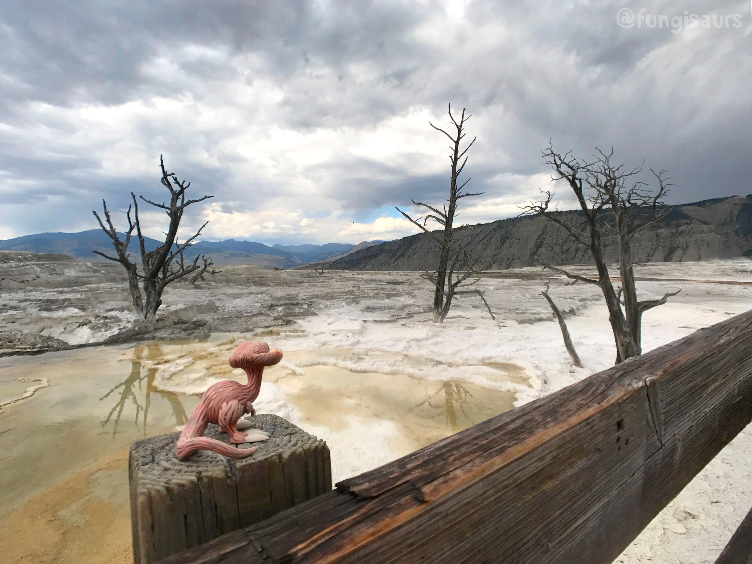 Yellowstone National Park, WY, USA