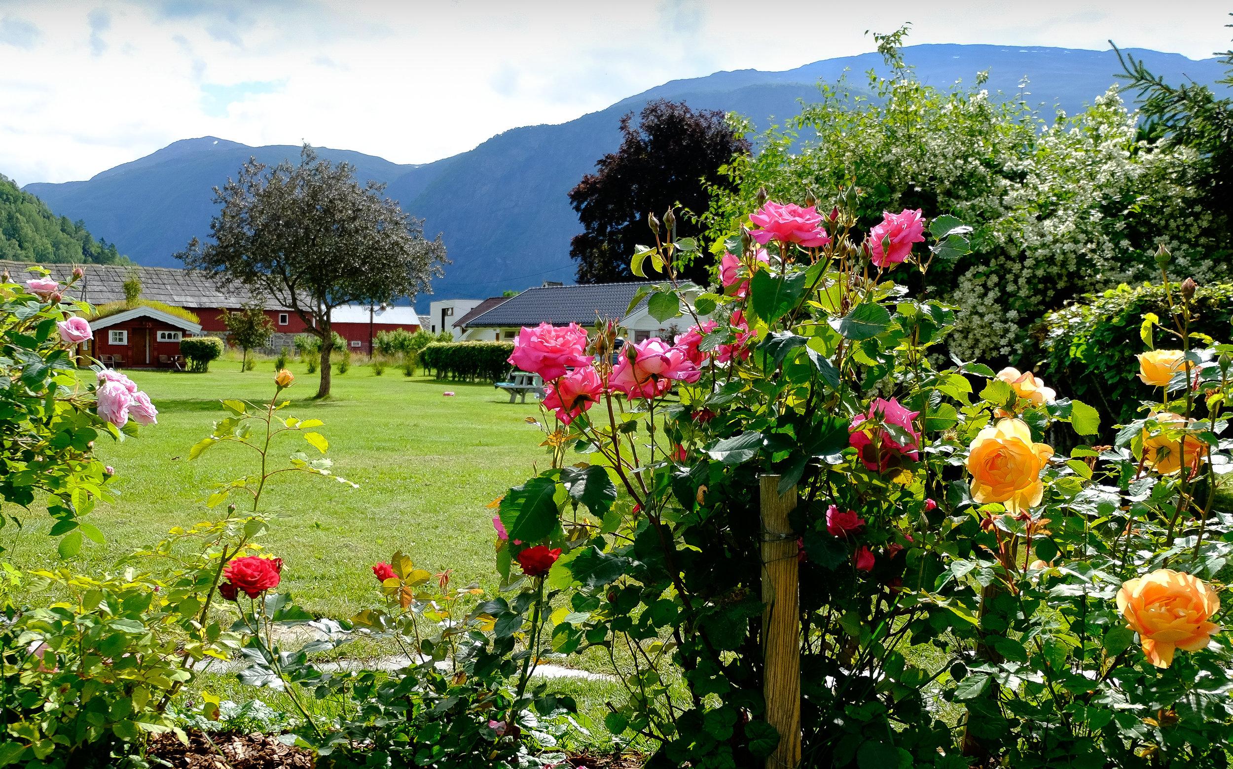 Rosehagen vår