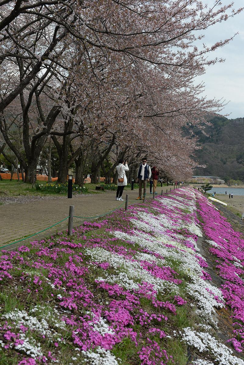 Lago_Kawawuchi_03.JPG