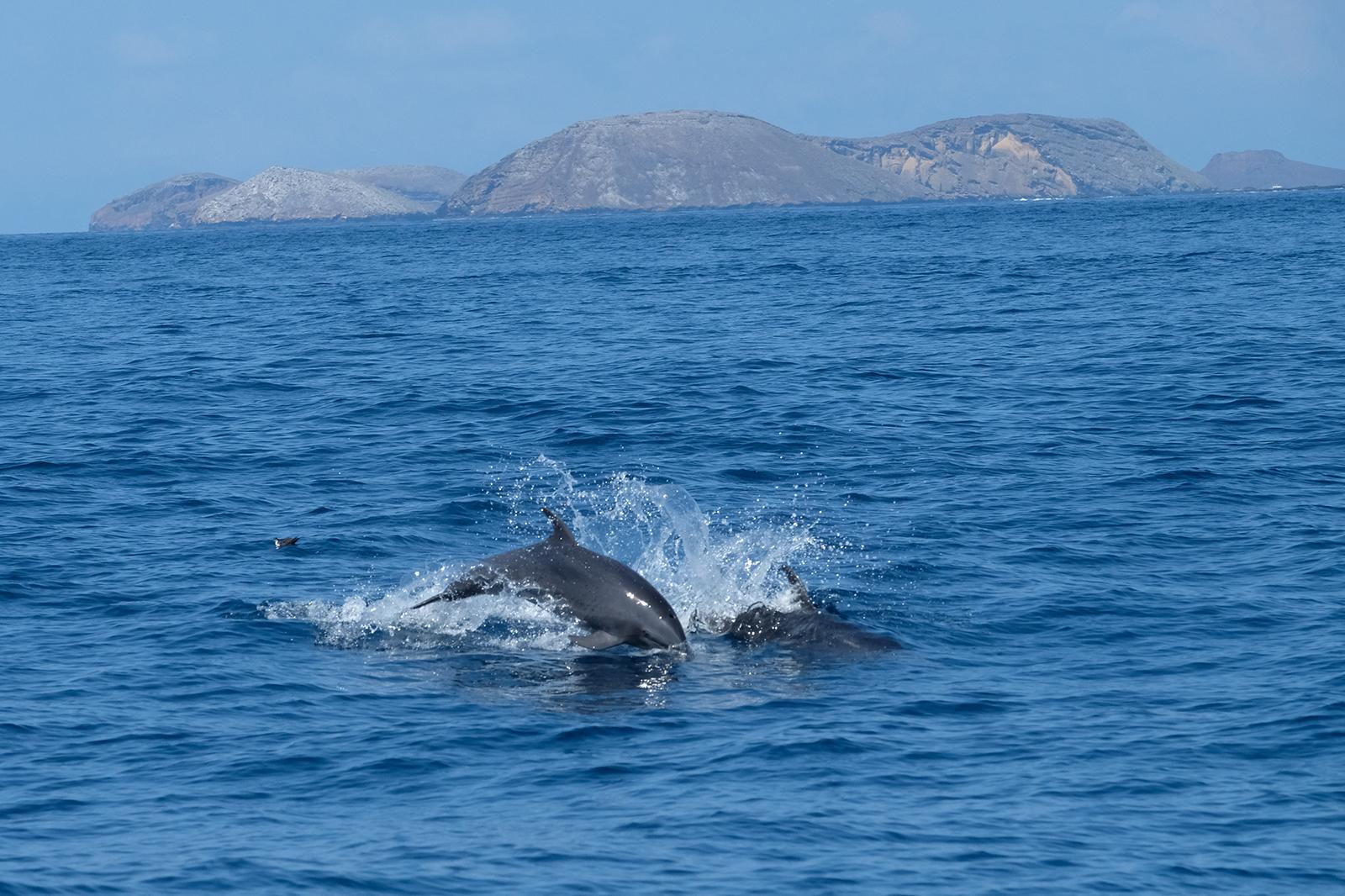 Delfines camino a San Bartolomé