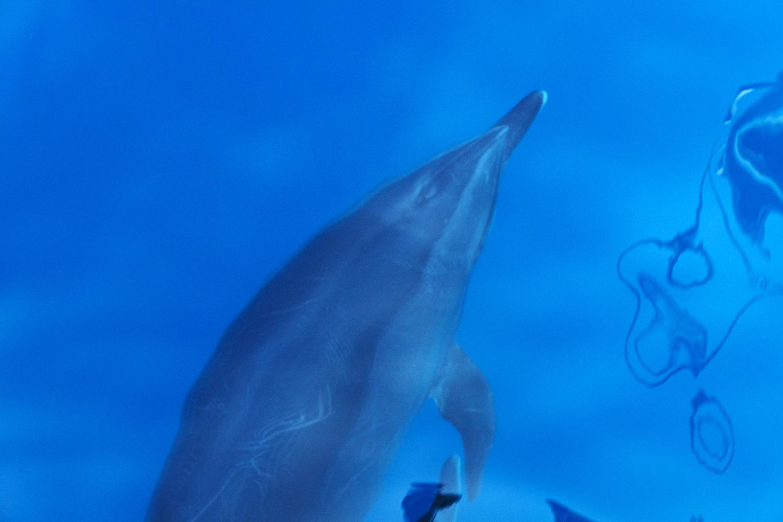 02_San_Bartolme_00_delfines_02.JPG