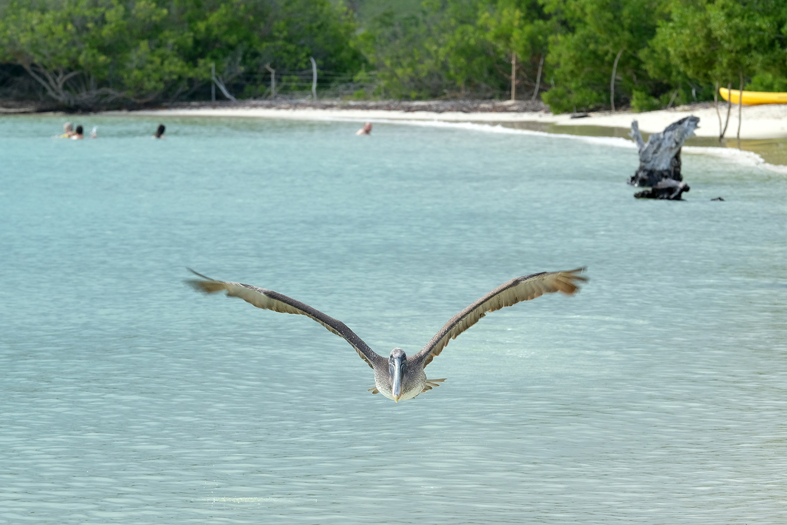 04_Playa_Bahia_de_Tortuga_04_pelicano.JPG