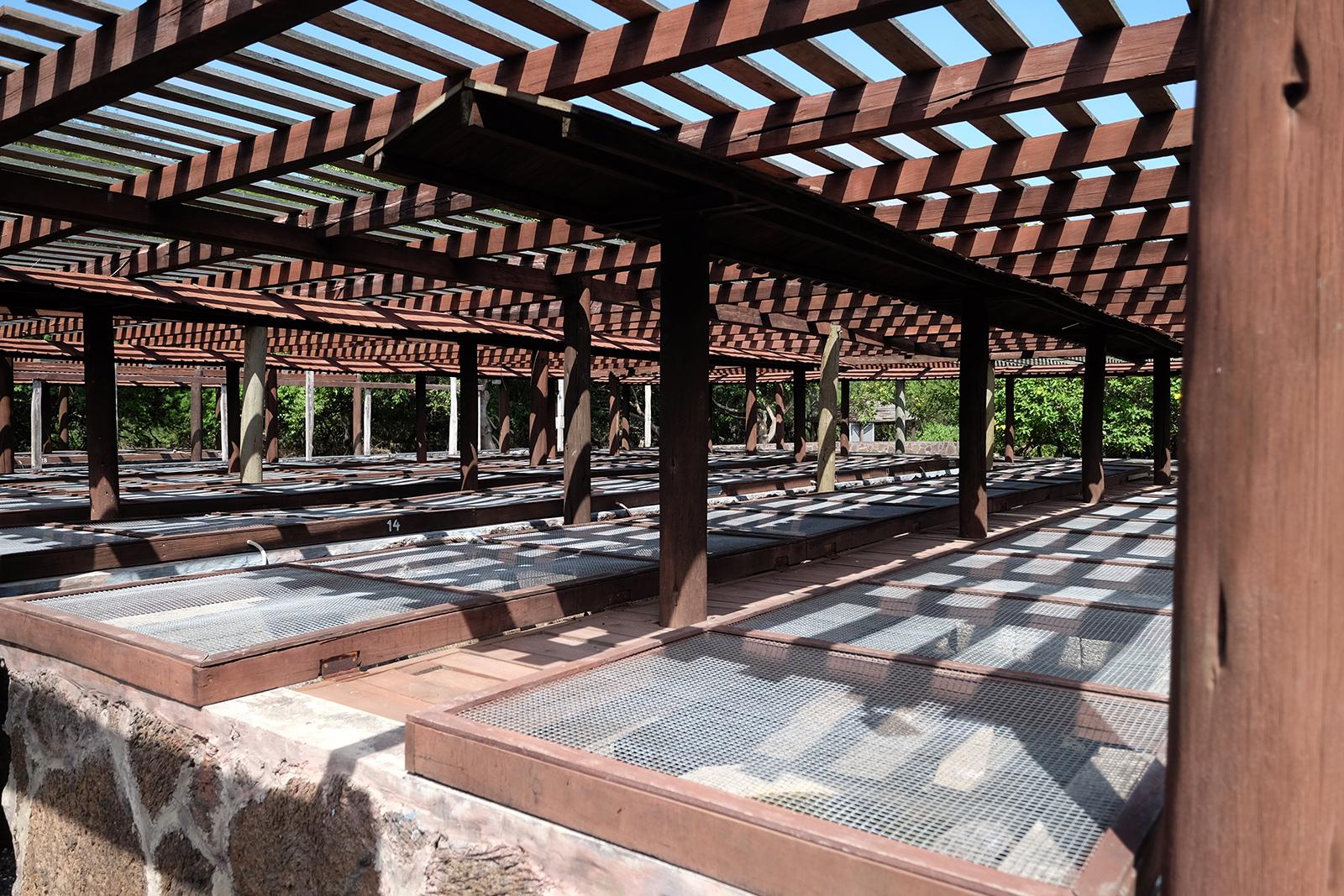 Centro de Crianza de Tortugas - Isla Isabela
