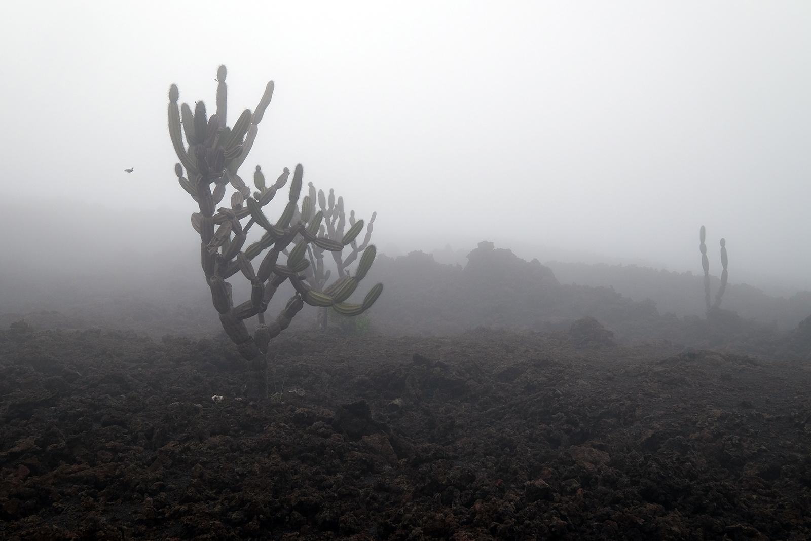 Cáctus en la penumbra - Volcán Chico