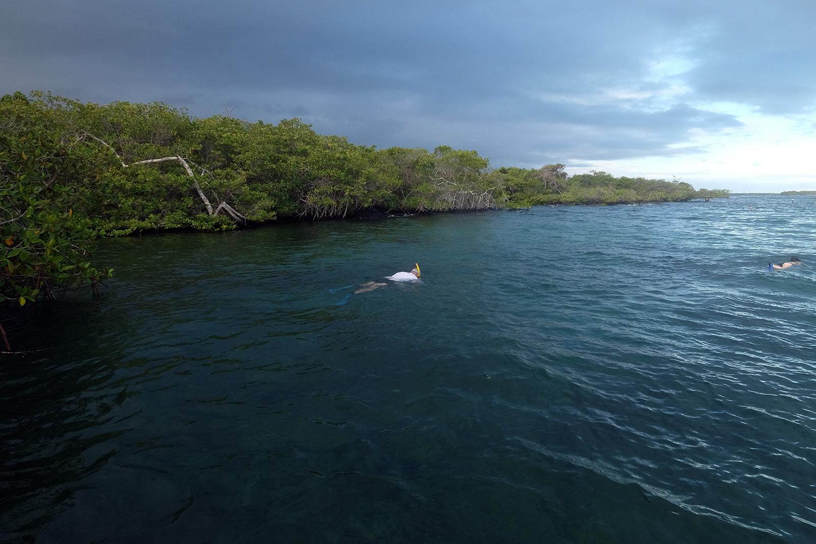 02_Playa_Concha_de_Perla_02_manglares.JPG