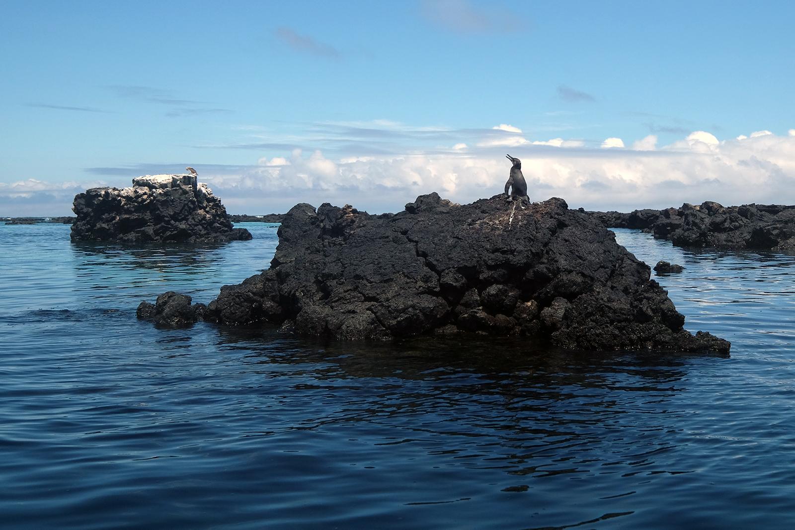 00_Cabo_Rosa_01_pinguinos.JPG