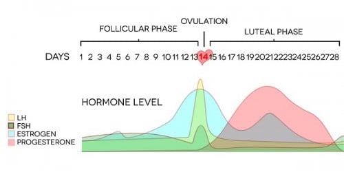 hormone-level_small_optim.jpg