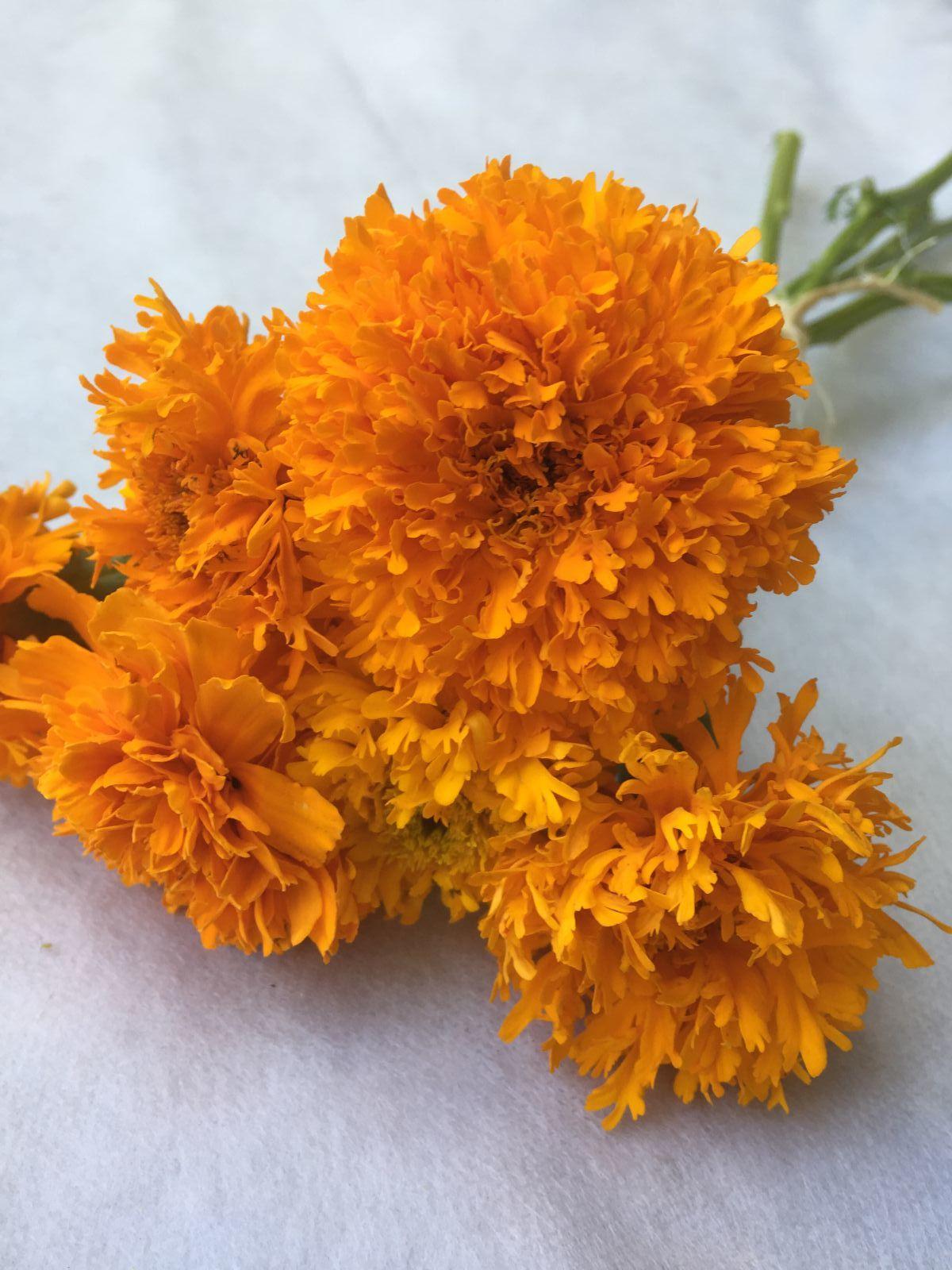 Pesche's Gold Marigold