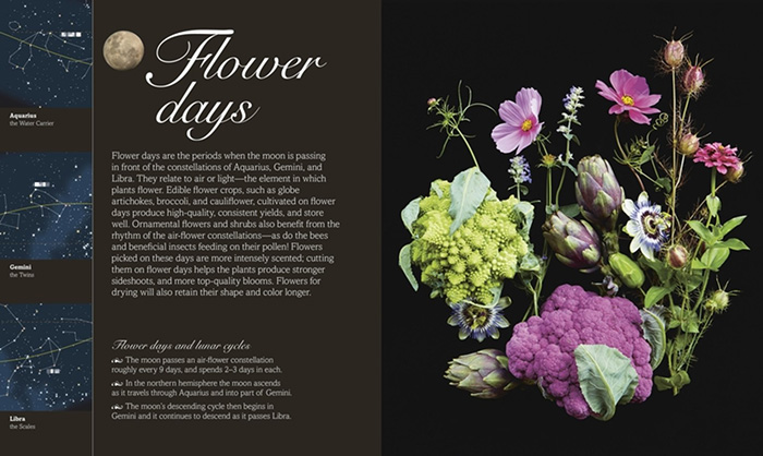 Biodynamic flower day.jpg