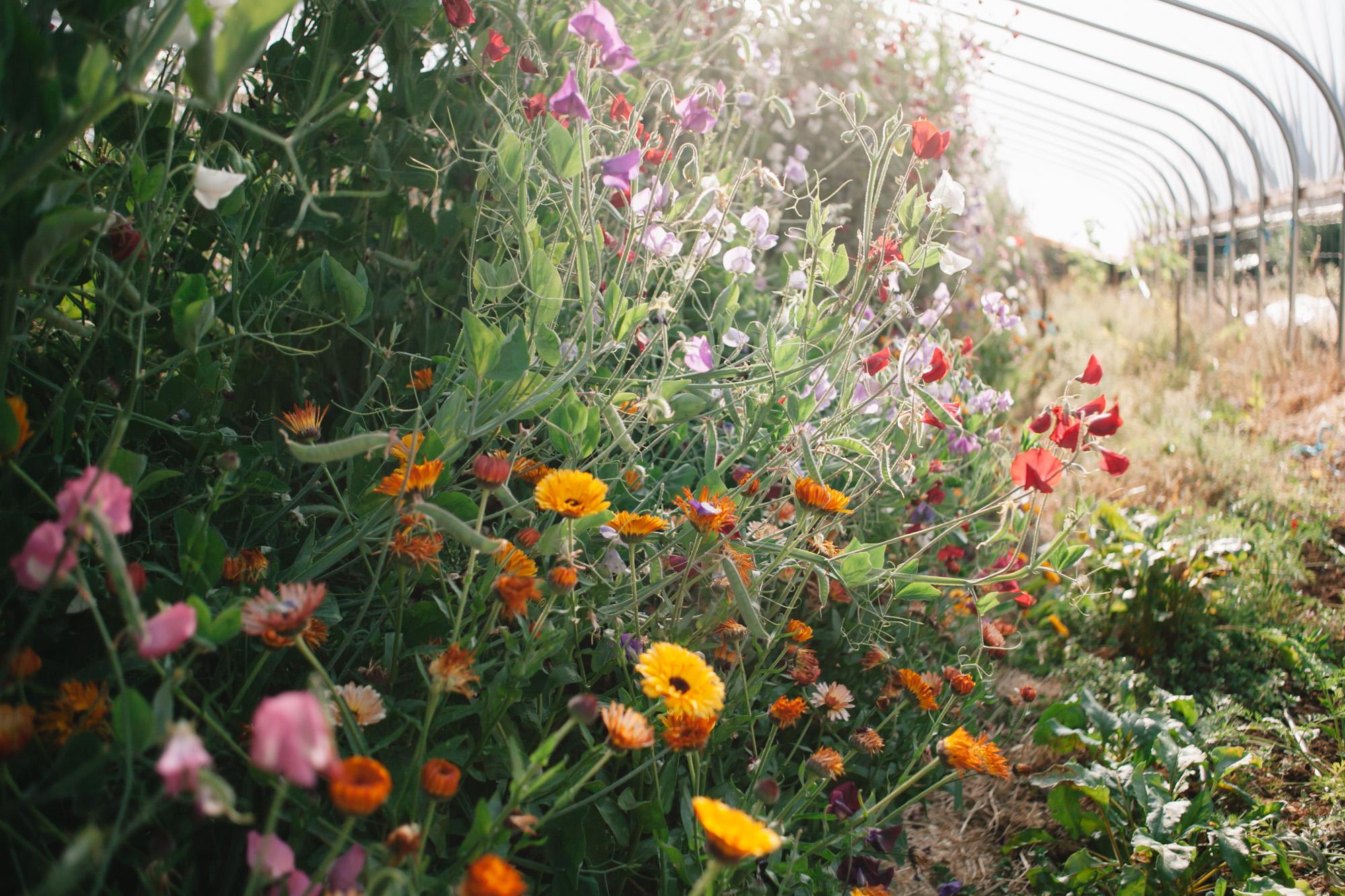 southern-oregon-flower-farms-21.jpg