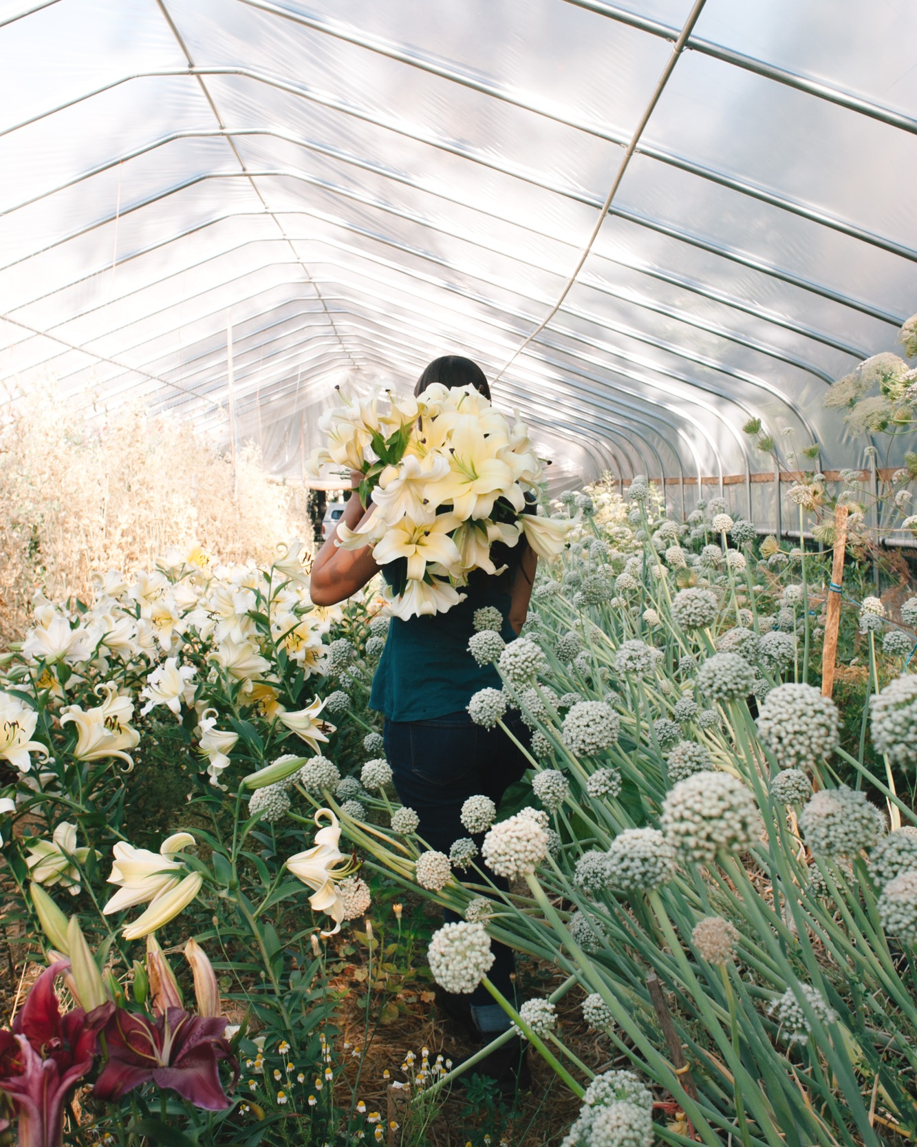- Welcome to Flora-- our organic flower farm and floral design studio located in Southern Oregon. Our purpose and passion is growing exceptional quality cut flowers and flower seeds. We select highly desirable cultivars that are prized by brides and wedding designers; we harvest our cut flowers at their peak beauty; we are always on the look-out for unusual and new varieties; and we enjoy the shared creative process of growing a particular flower crop with our clients in mind.