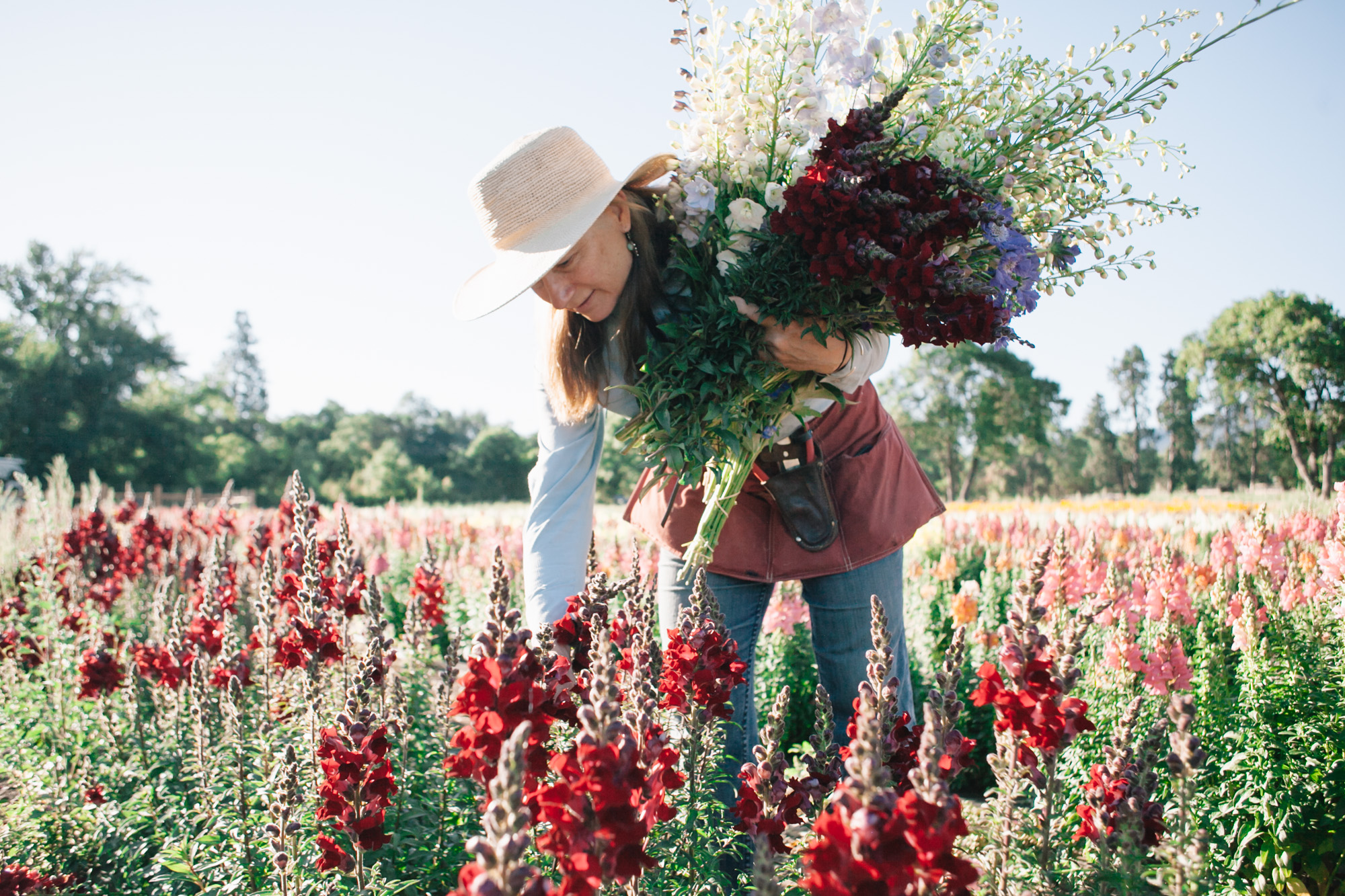 Joan Thorndike of Le Mera Gardens and Fry Family Farm picks snapdragons.