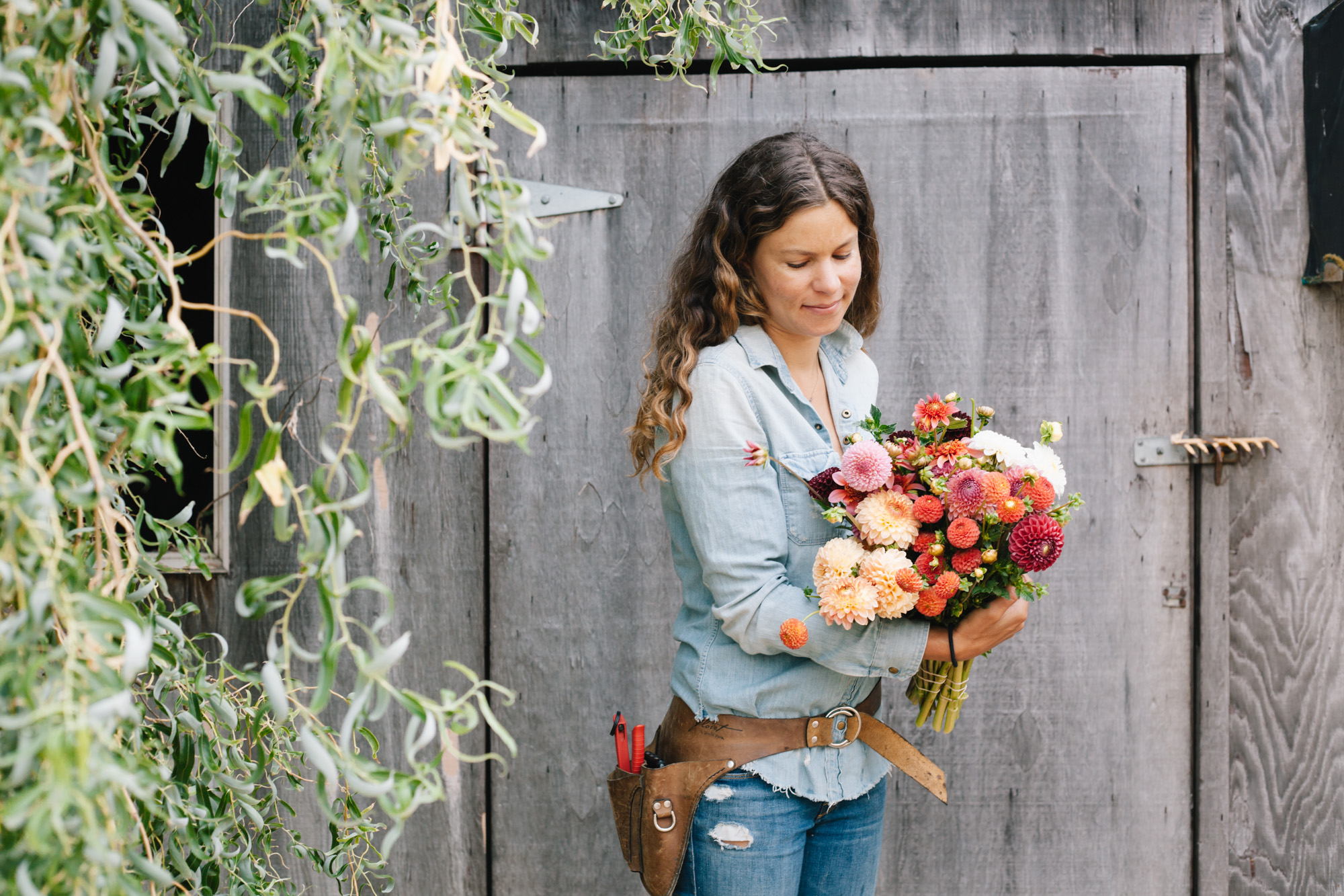 Lucy Whitridge of Petal and Seed Flowers demonstrates an early season harvest of dahlias.