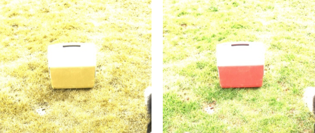 Cooler on grass: Dog's view on Left, Human's View on Right