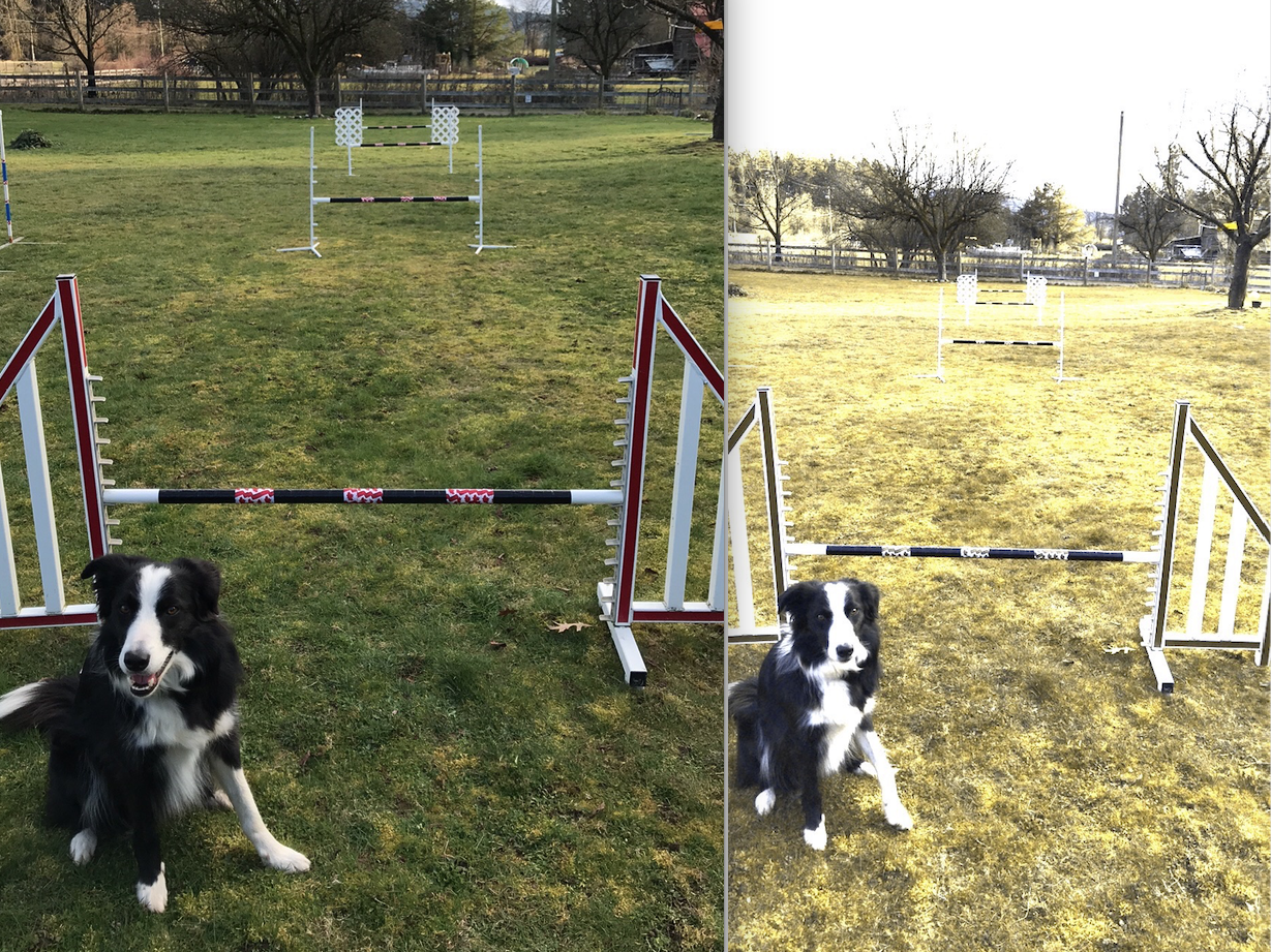 Black jump bars with red/white narrow contrasts shown in full spectrum on Left, and Dog's Eye View on Right. Even at 60 feet, the furthest black bar is clearly visible!