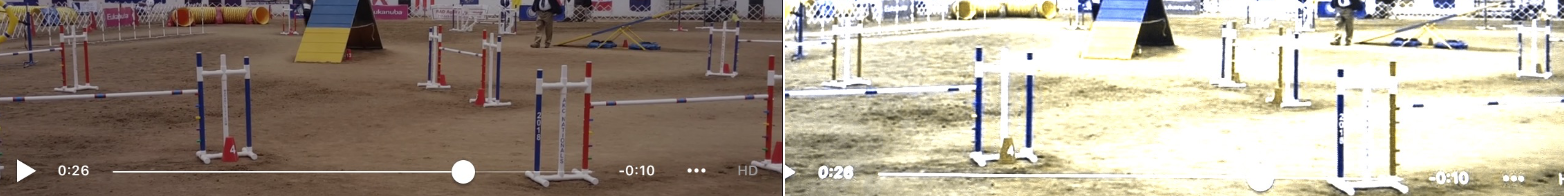 THE BLUE VERTICAL LINES (POSTS) ARE THE MOST DOMINANT IN THIS SETUP. THE HORIZONTAL LINE SHOULD BE - DOGS SIGHT THE HORIZON BEST WHEN FRAMED BY VERTICAL LINES. RED UPRIGHTS WITH BLUE BARS WOULD BE A GREAT SOLUTION.