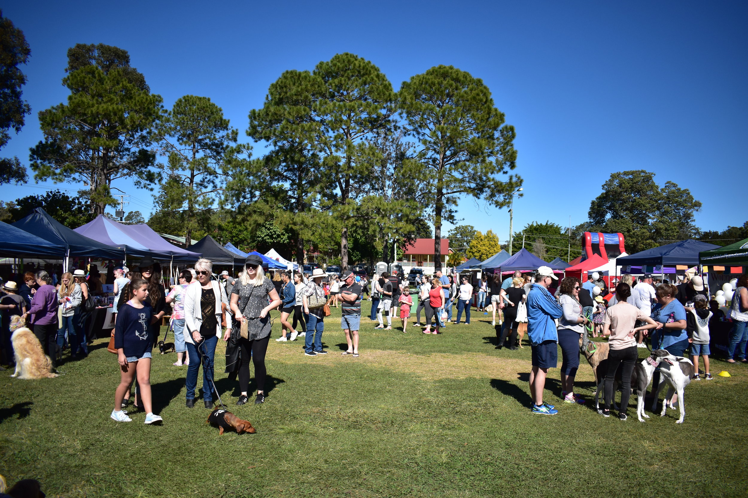 dogs on the green grass of mudgeeraba showgrounds