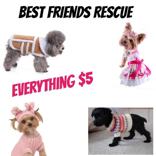 best friends dog rescue.jpg