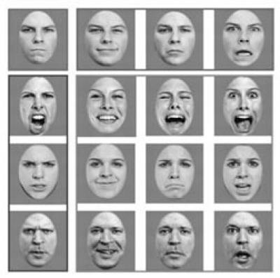 Face perception at the University of Iowa (2011)